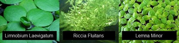il mio acquario - miniatlantide - Piante Galleggianti Acquario Chiuso