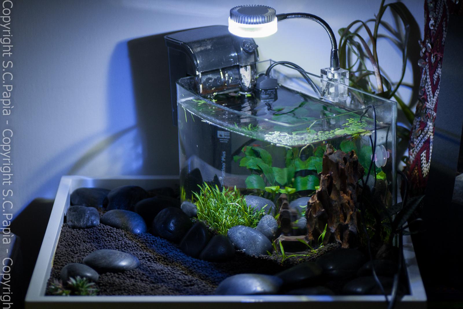 Il mio acquario miniatlantide for Filtro x acquario